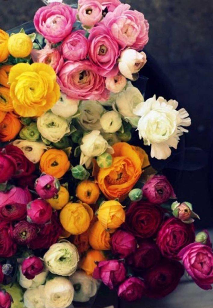 Ranúnculos, floristería badalona, flores a domicilio