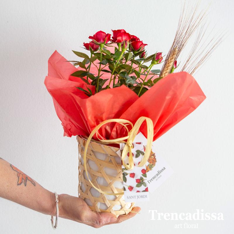 Rosal de pitiminí Sant Jordi Badalona